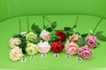 Uk růže anglická - velkoobchod, dovoz květin, řezané květiny Brno