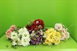 Uk kytice gerbera - velkoobchod, dovoz květin, řezané květiny Brno