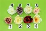 Uk květ růže mini - velkoobchod, dovoz květin, řezané květiny Brno