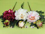 Uk Pivoňka větev - velkoobchod, dovoz květin, řezané květiny Brno