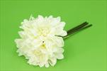 Uk Dahlia X3/25cm - velkoobchod, dovoz květin, řezané květiny Brno