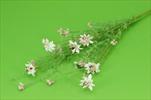 Uk Kytička kvetoucí - velkoobchod, dovoz květin, řezané květiny Brno