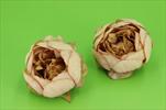 Uk květ pivoňka 6ks - velkoobchod, dovoz květin, řezané květiny Brno