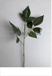 Uk Stonek 3 listy 65cm - velkoobchod, dovoz květin, řezané květiny Brno