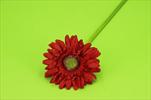 Uk gerbera 45cm - velkoobchod, dovoz květin, řezané květiny Brno