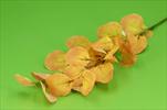 UK eukalypt 75cm - velkoobchod, dovoz květin, řezané květiny Brno