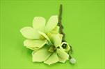 Uk Magnolie X2/40cm - velkoobchod, dovoz květin, řezané květiny Brno