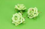 Uk květ růže 5cm - velkoobchod, dovoz květin, řezané květiny Brno