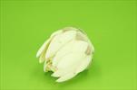 Uk květ protea 13/10cm - velkoobchod, dovoz květin, řezané květiny Brno