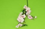 Uk větev jabloň 60cm - velkoobchod, dovoz květin, řezané květiny Brno