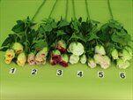 Uk růže větev X4/70cm - velkoobchod, dovoz květin, řezané květiny Brno