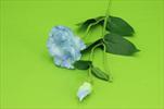 Uk Eustoma s poupětem 49cm - velkoobchod, dovoz květin, řezané květiny Brno