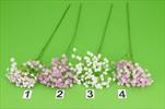 Uk Gypsophila latex 60cm - velkoobchod, dovoz květin, řezané květiny Brno