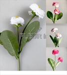 Uk sedmikráska X2/32cm - velkoobchod, dovoz květin, řezané květiny Brno
