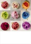 Uk Květ růže Oregon 9cm - velkoobchod, dovoz květin, řezané květiny Brno