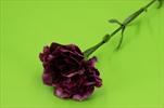 UK karafiát 68cm - velkoobchod, dovoz květin, řezané květiny Brno