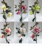 Uk Magnolie 75cm - velkoobchod, dovoz květin, řezané květiny Brno