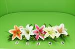 UK lilie latex 38cm - velkoobchod, dovoz květin, řezané květiny Brno