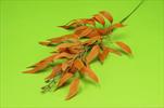 Uk Ruscus 60cm - velkoobchod, dovoz květin, řezané květiny Brno