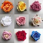 Uk květ růže 7cm - velkoobchod, dovoz květin, řezané květiny Brno