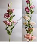 Uk eustoma 75cm - velkoobchod, dovoz květin, řezané květiny Brno