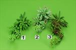 Uk sukulent větev - velkoobchod, dovoz květin, řezané květiny Brno