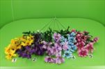 Uk cosmos větvička - velkoobchod, dovoz květin, řezané květiny Brno