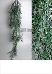 Uk zeleň popínavá plast 120cm - velkoobchod, dovoz květin, řezané květiny Brno