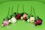 Uk Růže x2 - velkoobchod, dovoz květin, řezané květiny Brno