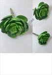 Uk sukulent 14cm - velkoobchod, dovoz květin, řezané květiny Brno