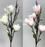 Uk magnilie 93cm - velkoobchod, dovoz květin, řezané květiny Brno