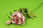 Uk Pivoňka větev starorůžová - velkoobchod, dovoz květin, řezané květiny Brno