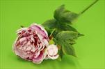 Uk Pivoňka větev růžová - velkoobchod, dovoz květin, řezané květiny Brno
