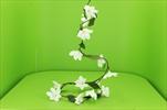 Uk Girlanda magnolie krémová - velkoobchod, dovoz květin, řezané květiny Brno
