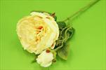 Uk Pivoňka větev žlutá - velkoobchod, dovoz květin, řezané květiny Brno