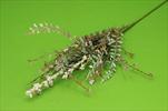 Uk větev přízdoba - velkoobchod, dovoz květin, řezané květiny Brno
