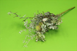 Uk větev - velkoobchod, dovoz květin, řezané květiny Brno