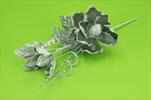 Uk magnolie stříbrná - velkoobchod, dovoz květin, řezané květiny Brno