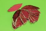 Do list 4x7cm/24ks bordeaux - velkoobchod, dovoz květin, řezané květiny Brno