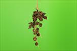 Do zvonečky 27cm - velkoobchod, dovoz květin, řezané květiny Brno
