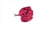 Sk Hortensia standard red - velkoobchod, dovoz květin, řezané květiny Brno