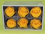 Sk Hlavy růže extra yellow 6pcs - velkoobchod, dovoz květin, řezané květiny Brno