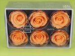Sk Hlavy růže extra peach 6pcs - velkoobchod, dovoz květin, řezané květiny Brno