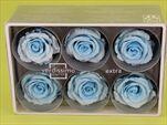 Sk Hlavy růže extra light blue 6pcs - velkoobchod, dovoz květin, řezané květiny Brno
