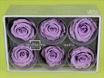 Sk Hlavy růže extra lila 6pcs - velkoobchod, dovoz květin, řezané květiny Brno