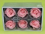 Sk Hlavy růže extra light pink 6pcs - velkoobchod, dovoz květin, řezané květiny Brno