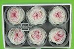 Sk hlavy růží Garden 6pcs white/pink - velkoobchod, dovoz květin, řezané květiny Brno