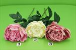 Uk Pivoně zavitá x1 - velkoobchod, dovoz květin, řezané květiny Brno