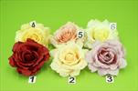 Uk růže květ rozvitá - velkoobchod, dovoz květin, řezané květiny Brno