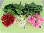 Uk Muškát 40cm - velkoobchod, dovoz květin, řezané květiny Brno